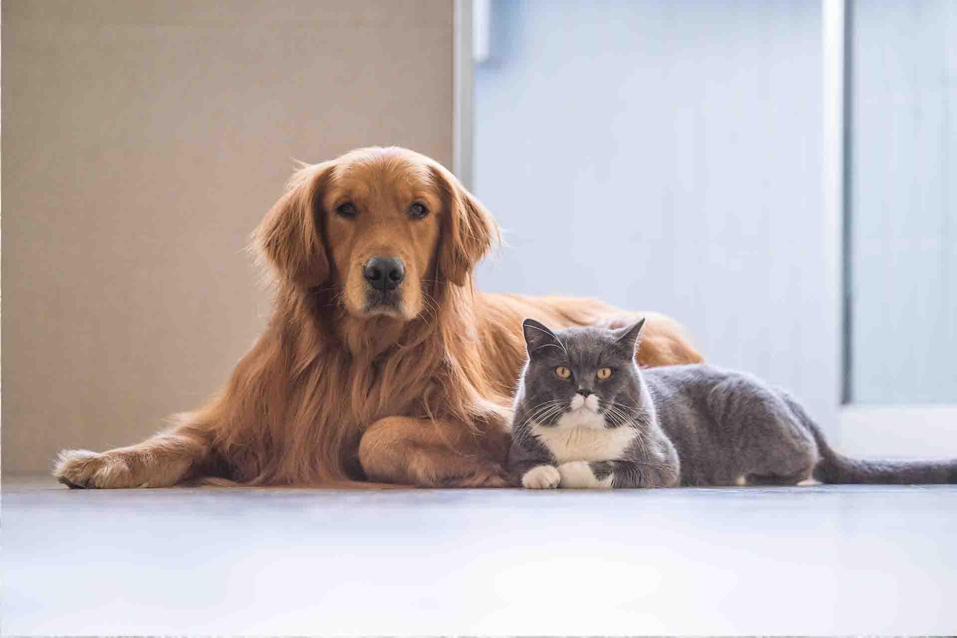 Vet Services for Pets